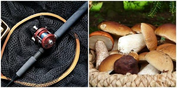 Pesca Funghi Toscana